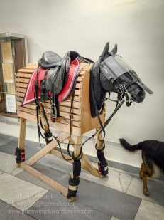 Czech mounted police horse protection. Photo: Julian Tennant